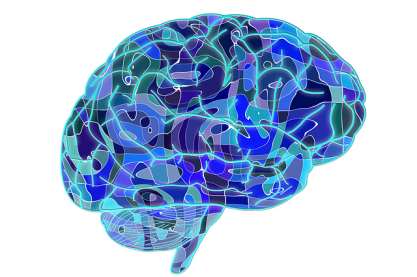 Brain - image from pixabay.com CC0